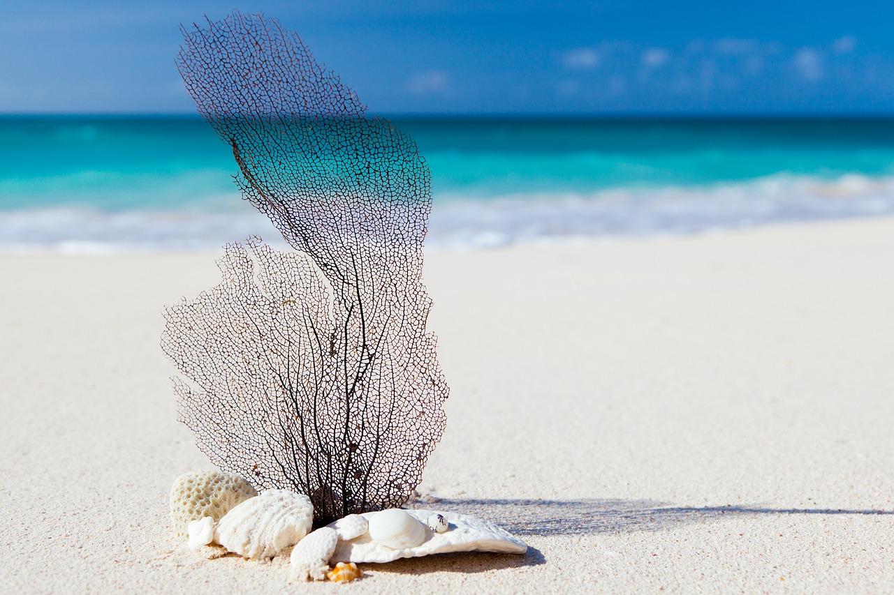 beach-84565_1280